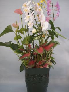 熊本産 観葉植物寄せ5