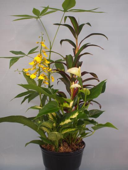 熊本産 観葉植物寄せ8