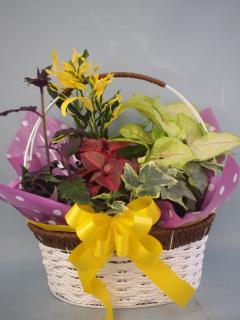 ワイヤーバスケット観葉植物4(小)