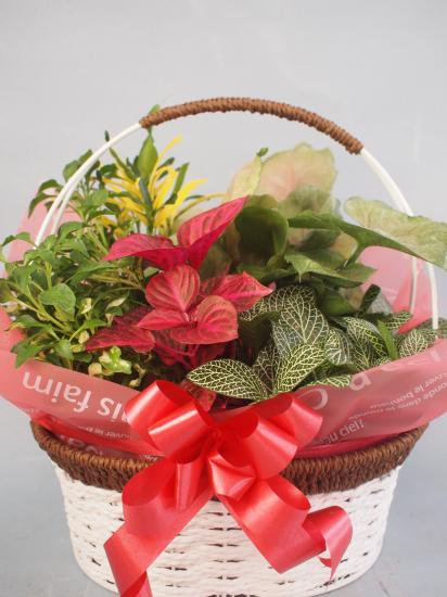 ワイヤーバスケット観葉植物5(小)