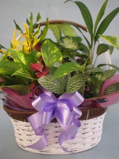 ワイヤーバスケット観葉植物6(小)