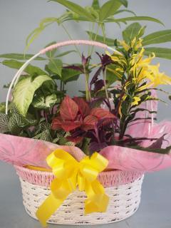 ワイヤーバスケット観葉植物7(小)