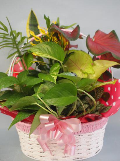 ワイヤーバスケット観葉植物8(小)