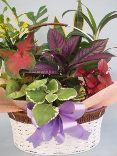 ワイヤーバスケット観葉植物9(小)