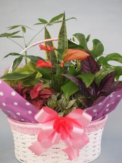 ワイヤーバスケット観葉植物10(小)