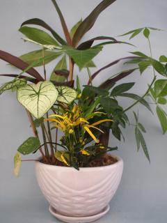 陶器鉢観葉植物寄せ11(小)