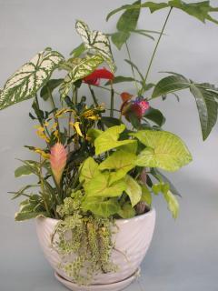 陶器観葉植物寄せ下皿付