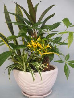 陶器鉢観葉植物寄せ12(小)