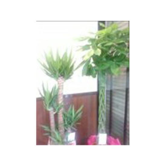 観葉植物(ご希望の種類・大きさをご注文ください)