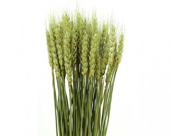 小麦 ナチュラル