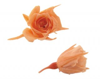 FLOREVER<br>フレッシュルック・マイクロローズ(1箱20輪入)<br />サンセットオレンジ