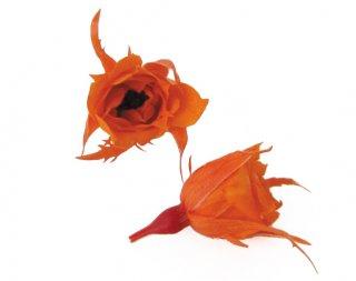 FLOREVER<br>フレッシュルック・マイクロローズ(1箱20輪入)<br />タンジェリンオレンジ