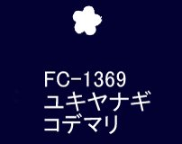 <img class='new_mark_img1' src='https://img.shop-pro.jp/img/new/icons24.gif' style='border:none;display:inline;margin:0px;padding:0px;width:auto;' />SA−1369<br />ユキヤナギコデマリ うす絹 固糊【ネコポス可】