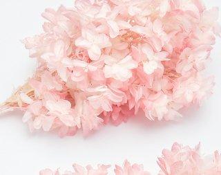 大地農園<br>カシワバアジサイ<br />ホワイトピンク