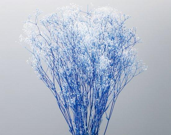 ミニカスミ草・フラワーベール白/ブルー