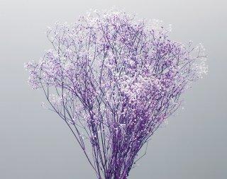ミニカスミ草・フラワーベール白/パープル