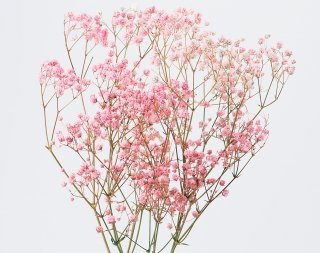アンティークプリザ・カスミ草ピンク