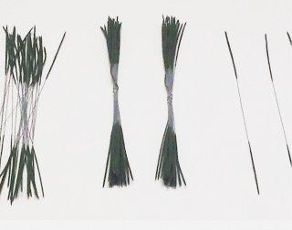 黒松 (30本×3束入り)