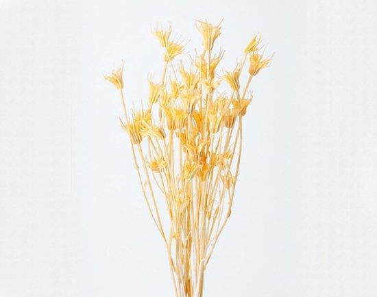ニゲラオリエンタリス/ ジュリアオレンジ