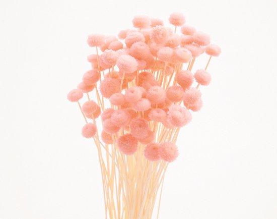 アマレリーフラワー / ピンク
