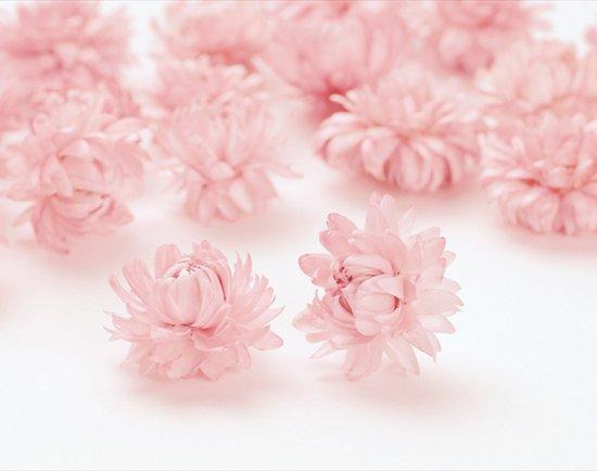 ヘリクリサム・サイズアソート / ピンク