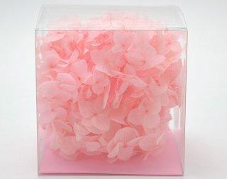 アナベルCUBE ピンク