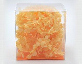 アナベルCUBE オレンジ