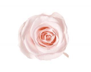 ローズ・ヴェルメイユ<br />アイネス8<br />ピンクシャンペーン