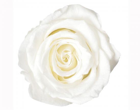 ローズ・ヴェルメイユアイネス8プリンセスホワイト