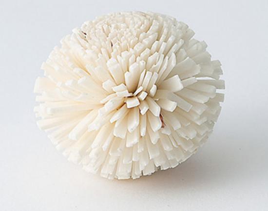 ソーラーポンポン菊 / 白