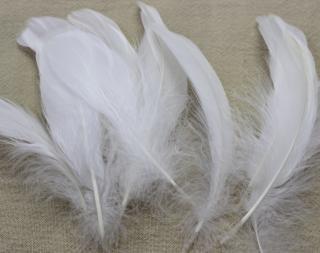 ファンシーフェザー No.10 鵞鳥 ナゴリア【ネコポス可】