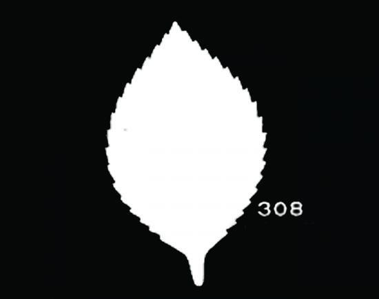 TM308 バラリーフ中 サテン