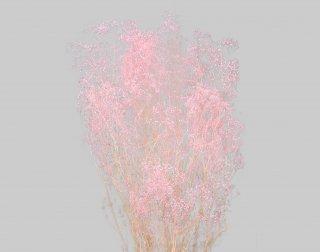 大地農園<br>ソフトミニカスミ草 ピンク