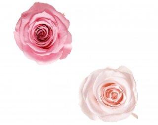 ローズ・ヴェルメイユ<br />アイネスアソートB<br />マドレーヌピンク ピンクシャンペーン