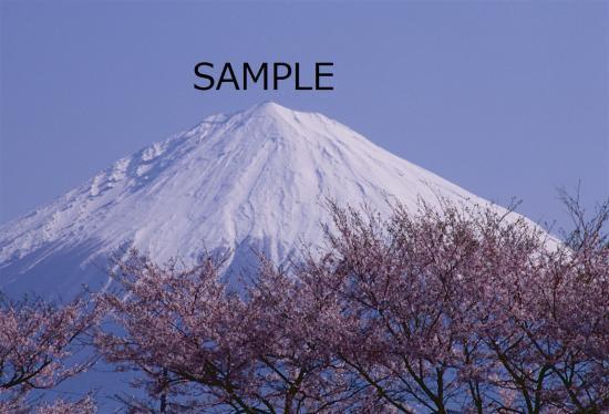富士桜の季節 No.1