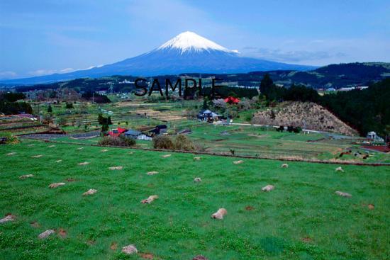 芝川の富士