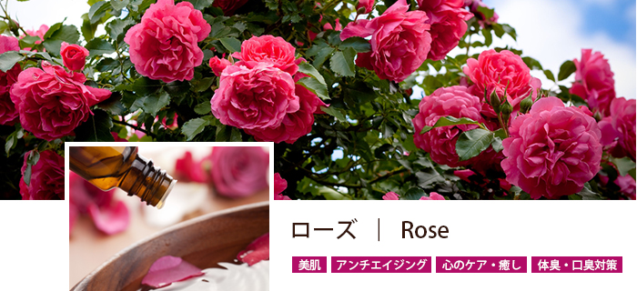 category_rose