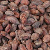 フェアトレード カカオ生豆