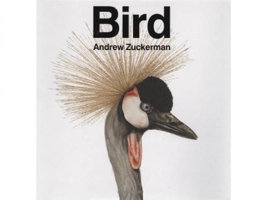 鳥類の写真集