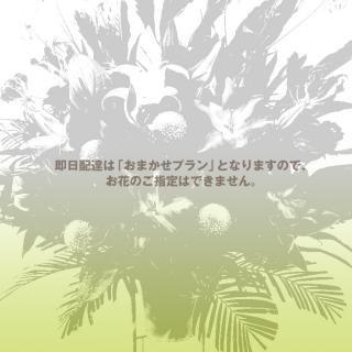 rp-100 即日配達・おまかせレギュラープランのスタンド花
