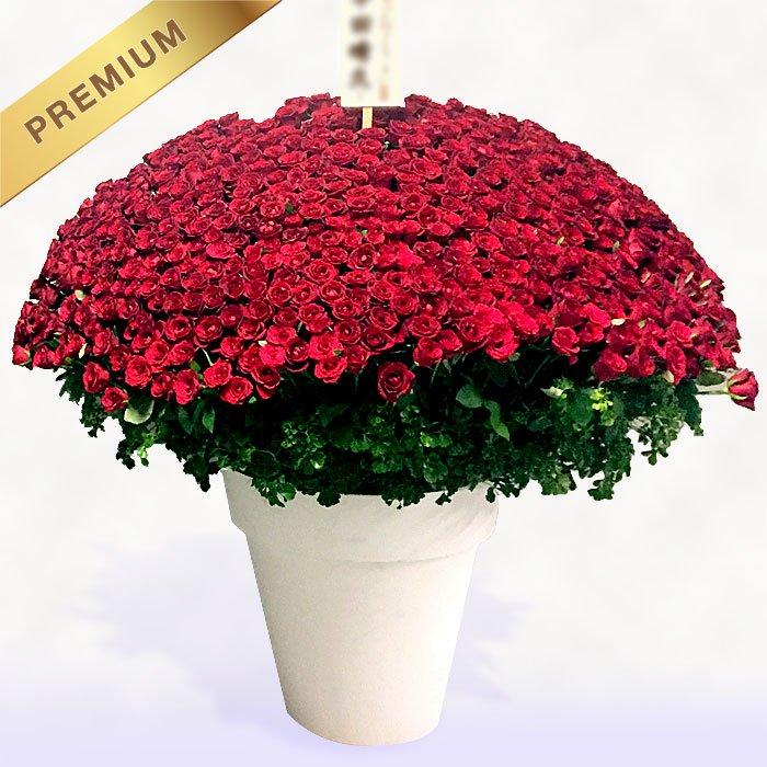 赤いバラ(薔薇)500本のスタンド花 500ROSES - スタンド花なら勝ち花.com